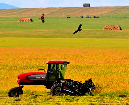сельское хозяйство сша