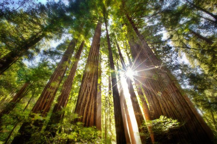 Парк Редвудс в Калифорнии