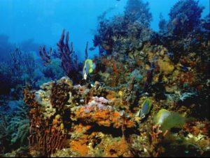 Флоридский коралловый риф