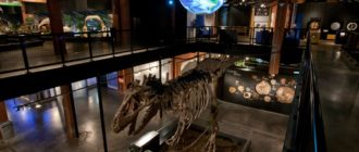 Музеи Хьюстона