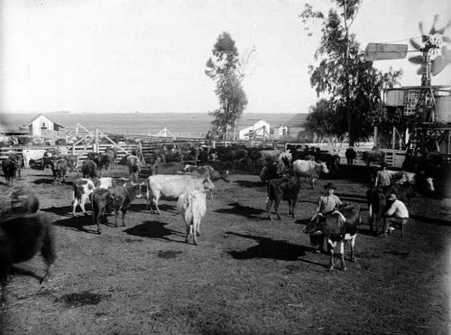 беверли хиллз ранчо