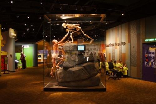 экспозиции денверского музея
