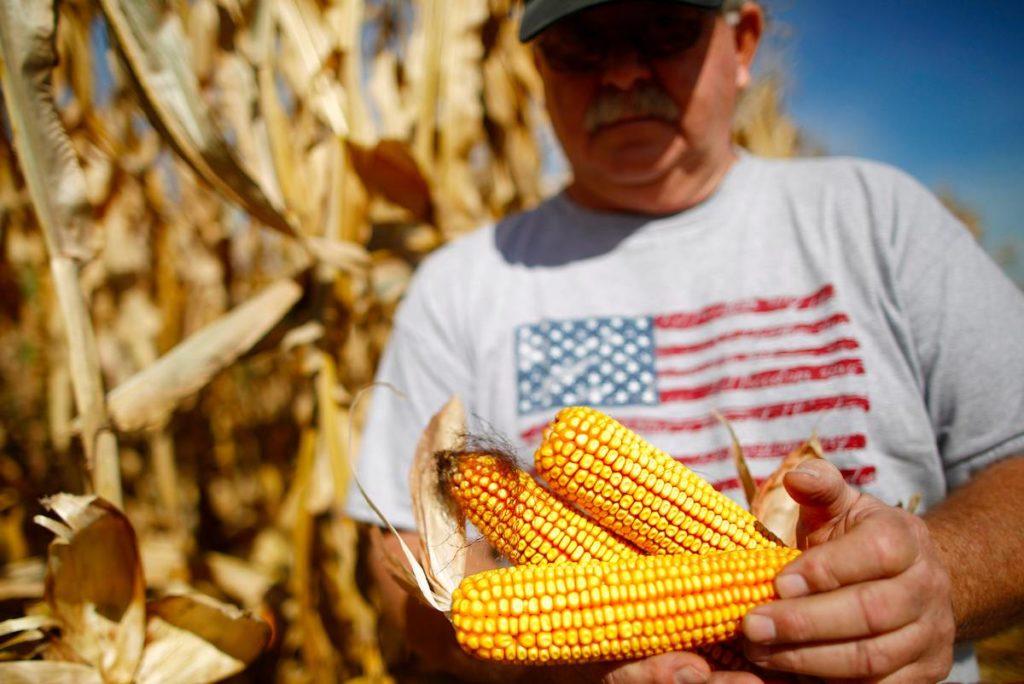 Сельское хозяйство в США кукуруза