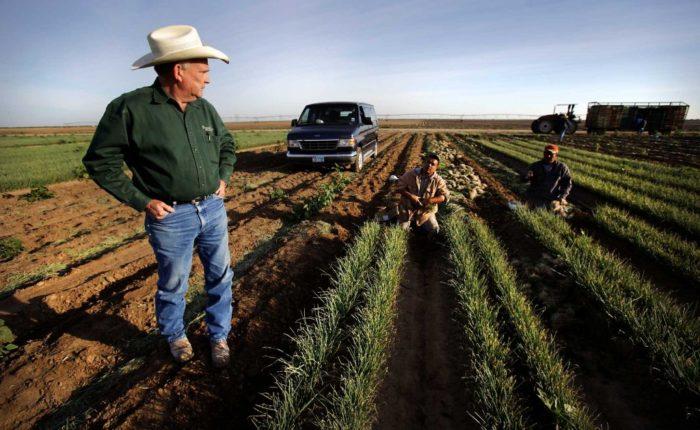 Сельское хозяйство в США