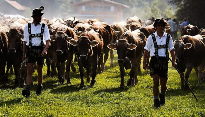 Животноводство в Германии